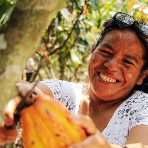 Genoveva, a cocoa farmer, harvesting her crop in the Cordillera Azul project.