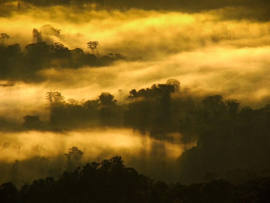 Sunrise in the Cordillera Azul project. Photo © Alvaro del Campo.