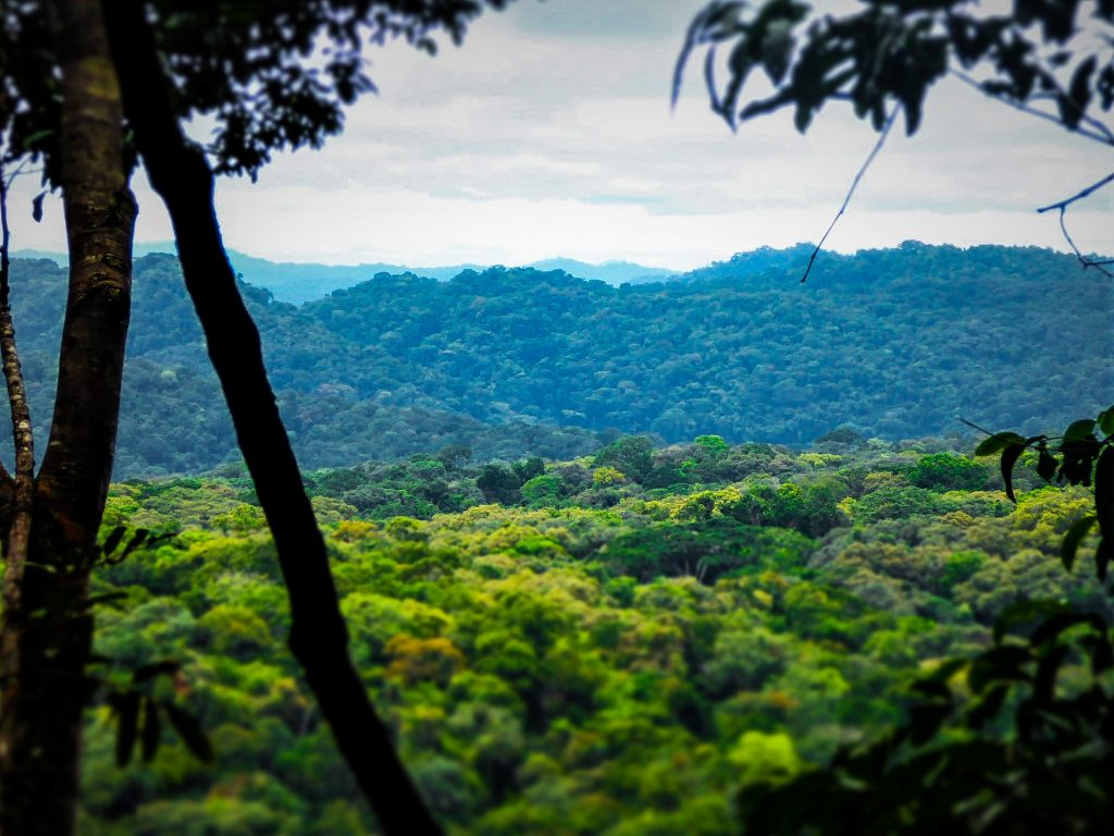 Rainforest landscape in the Gola Rainforest project.