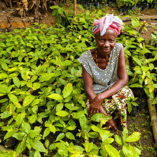Nancy Mansarray, a Gola Rainforest local, with nursery plants.
