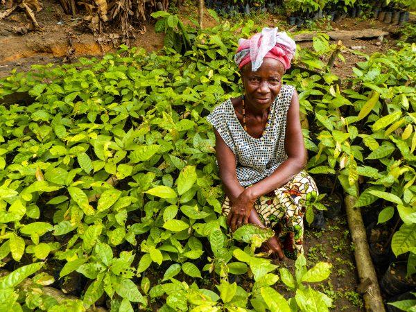 Nancy Mansarray, a Gola Rainforest local, with nursery plants.