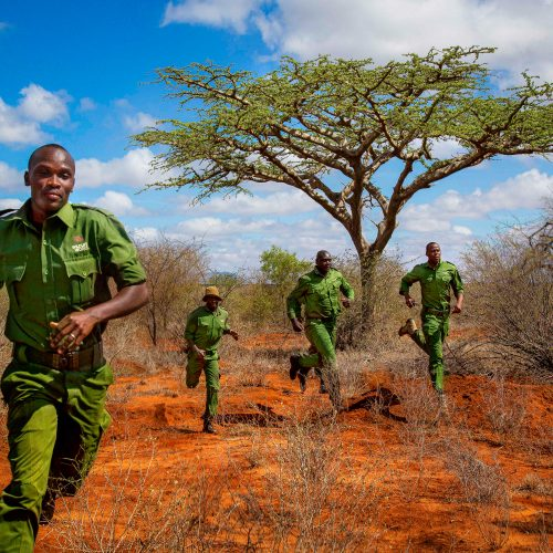 Rangers in action in the Kasigau Wildlife Corridor project.