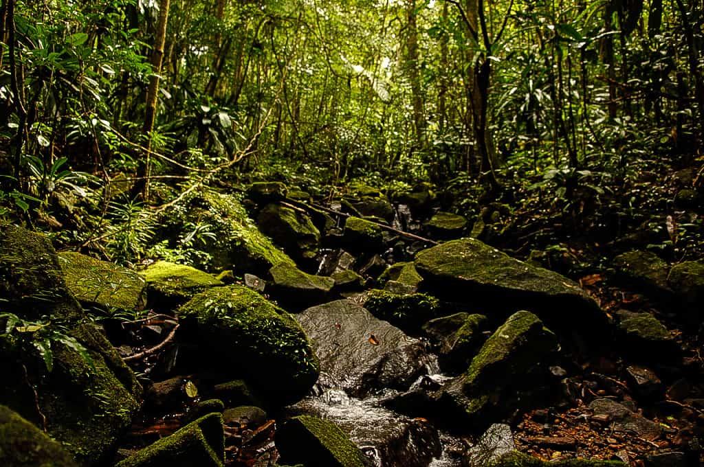 The rainforest floor, Makira Natural Park project, Madagascar.
