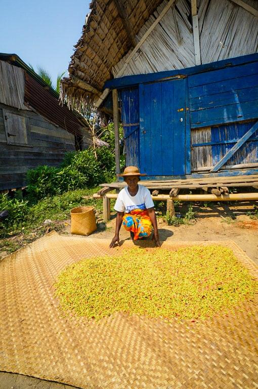 Rice harvest near the Makira project, Madagascar.