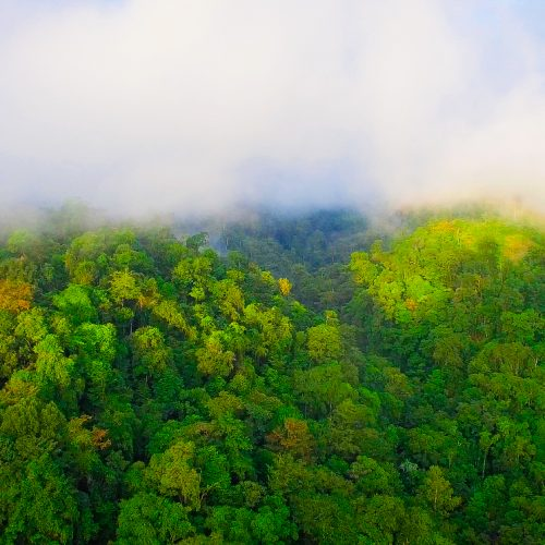 Fog and forest in the Guatemala Conservation Coast project.