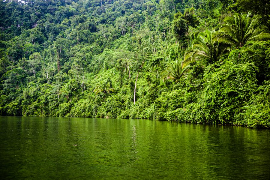 River and rainforest in the Guatemala Conservation Coast project.