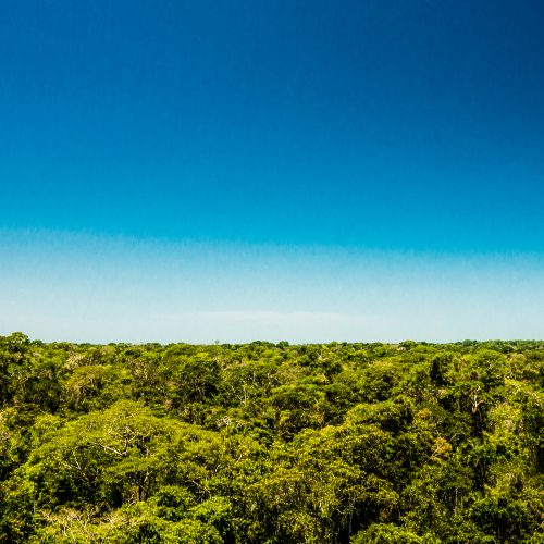 A panorama of the landscape at the Tambopata project, Peru.