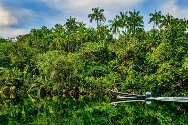 Jungle and river in Southern Cardamom, Cambodia.