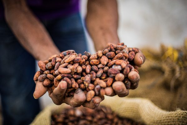 A worker holds cocoa beans during processing in the Pacific Forest Communities project in Colombia.