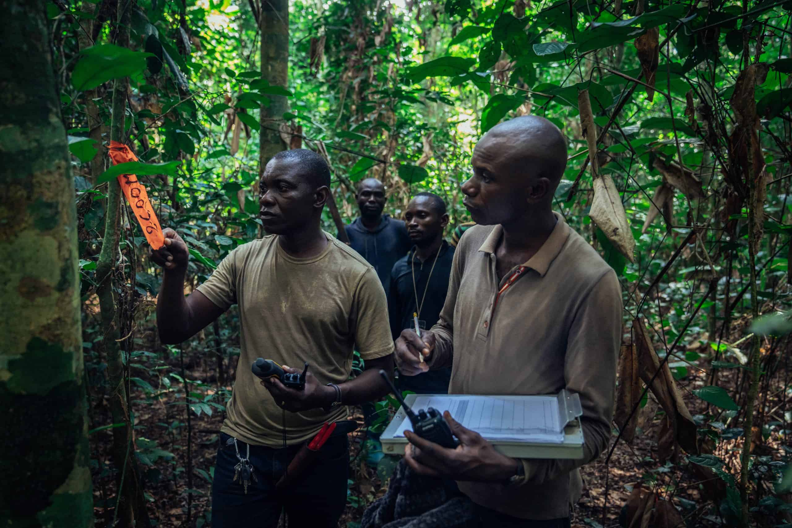 Foresters monitoring and flagging trees in the Mai Ndombe project, DRC. Photo credit: Filip C. Agoo for Wildlife Works Carbon.