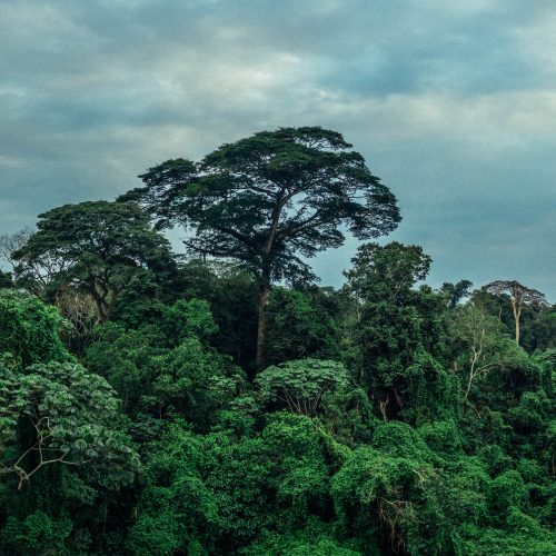 Rainforest jungle in the Mai Ndombe project, DRC. Photo credit: Filip C. Agoo for Wildlife Works Carbon.