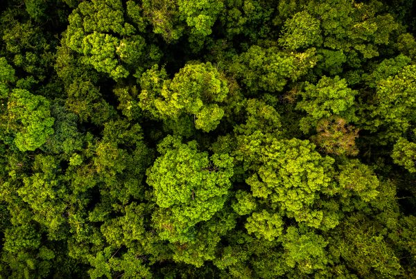 Rainforest canopy in the Southern Cardamom project, Cambodia.