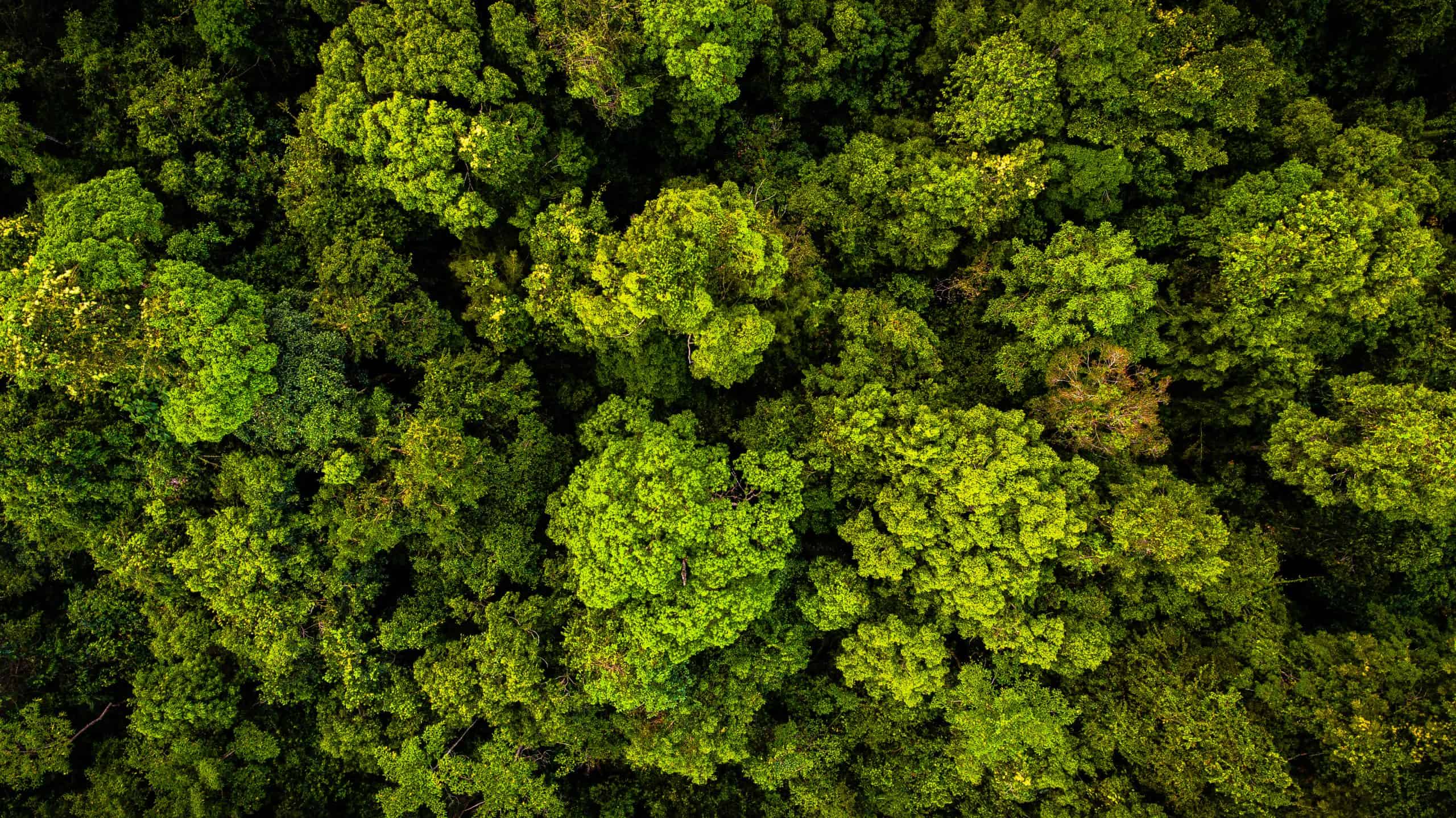 8 Reasons We Need To Save (Tropical) Forests