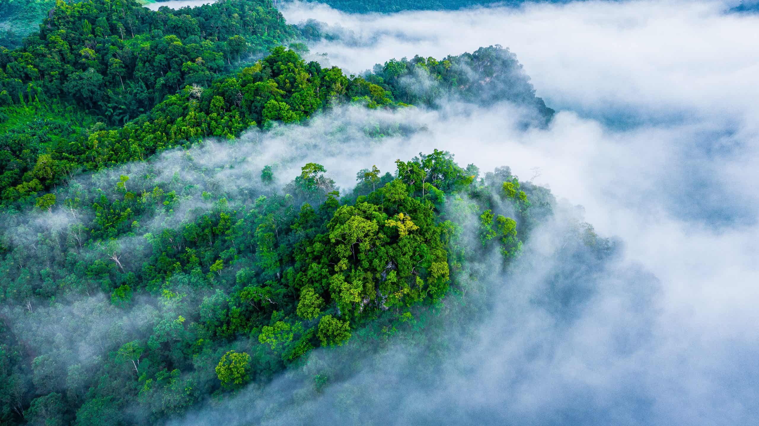 Why You Should Save Forests Before Planting Trees