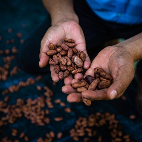 A cacao producer in the Tambopata project holds some beans. (C) Marlon Dag.